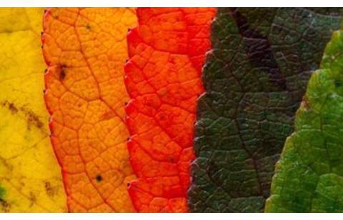 第一种在宇宙中出现的颜色是什么,色彩如何揭示演化的不同阶段?