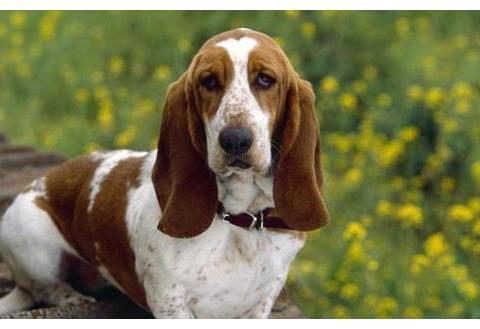 """以下5点是狗狗""""长大成人""""的标志,你家的狗长大了吗?"""