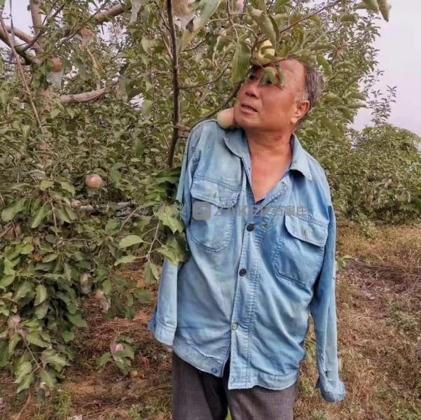 """无臂励志果农万余斤苹果滞销!本报和志愿者为他的果子找""""婆家"""""""
