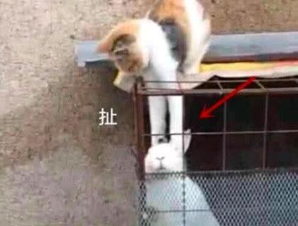女子发现猫咪不见踪影,结果后院传来叫声,赶去查看时一脸蒙逼