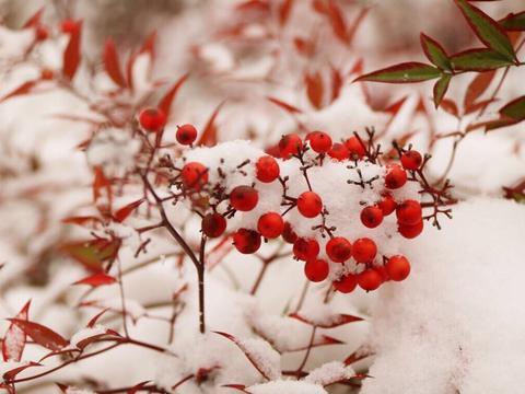 一首冬日千古宋词,大雪纷飞思念家人,道尽人生悲欢