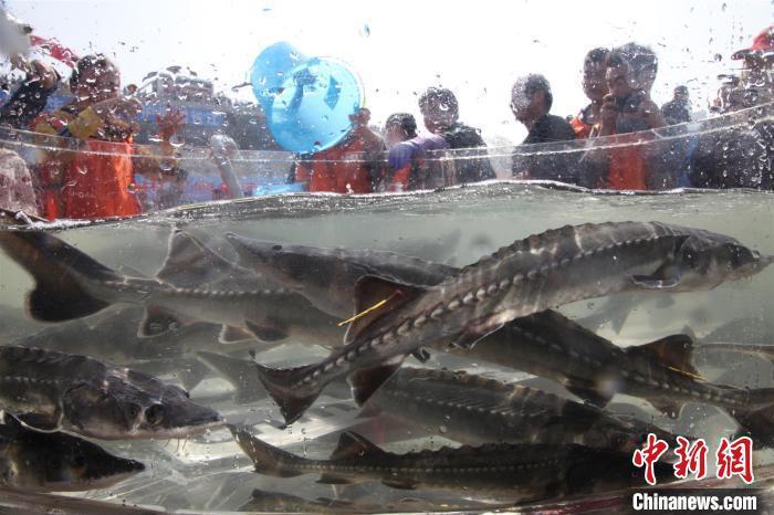 在线赌博棋牌,三门峡市湖滨区:爱心企业为扶贫工作加油助威