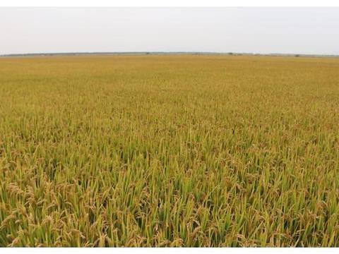农机化发展助推,河南夏邑县农业增效农民增收
