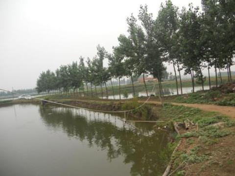 农村的非农业户口能不能享有集体土地征收补偿