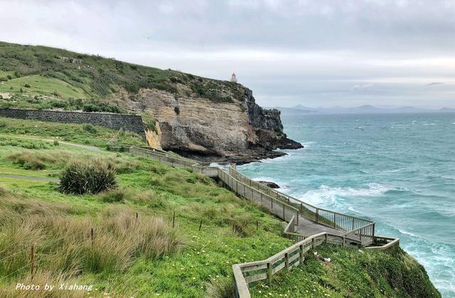 新西兰的这个小岛,不仅有黄眼企鹅,还有皇家信天翁