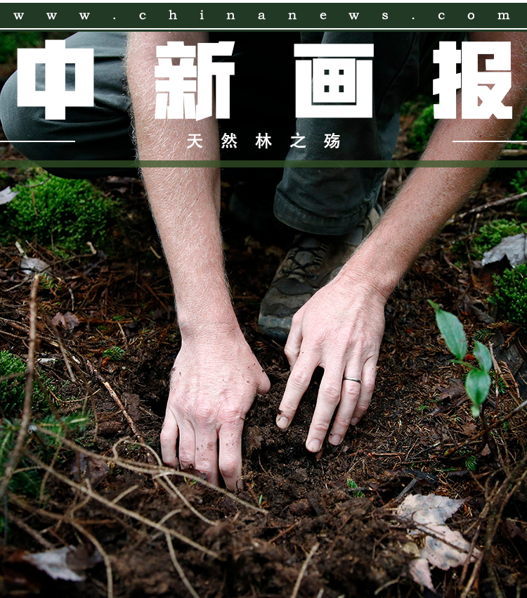 【图片故事】天然林之殇【图片故事】天然林之殇
