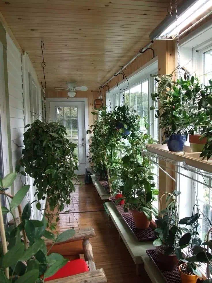 5种悬挂养护的多肉植物,养成垂盆植物,给散射光还能开花