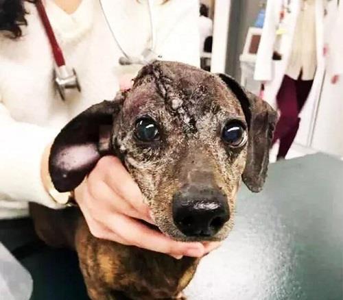 流浪狗的头很奇怪,医生将头里的东西取出后,引发众怒