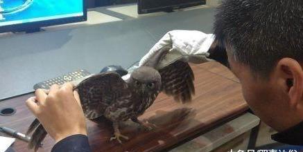 市民报警有只野鸟不会飞,一查还是国家二级保护动物