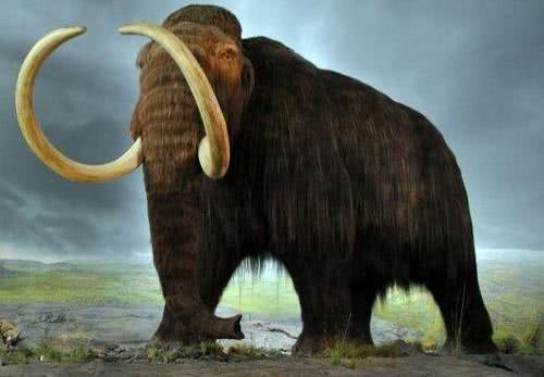 四川网友发现8枚巨型脚印,古生物学家判断曾存在3种罕见恐龙