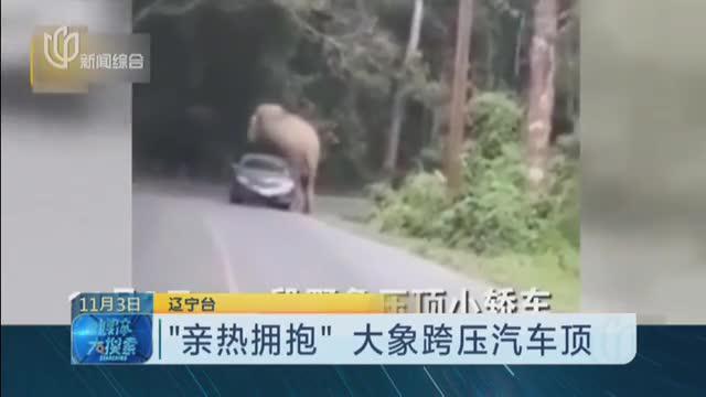 """""""亲热拥抱""""大象跨压汽车顶"""