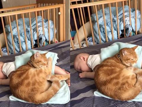 橘猫吸婴儿后脑勺 真相曝光长知识