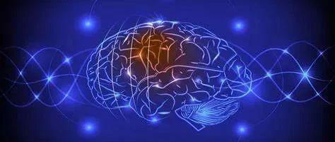 探索自闭症的新视角:患者脑细胞免疫反应的初步证据