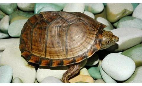 世界上寿命最长的四种生物,乌龟垫底,第一拥有长生不老的秘密
