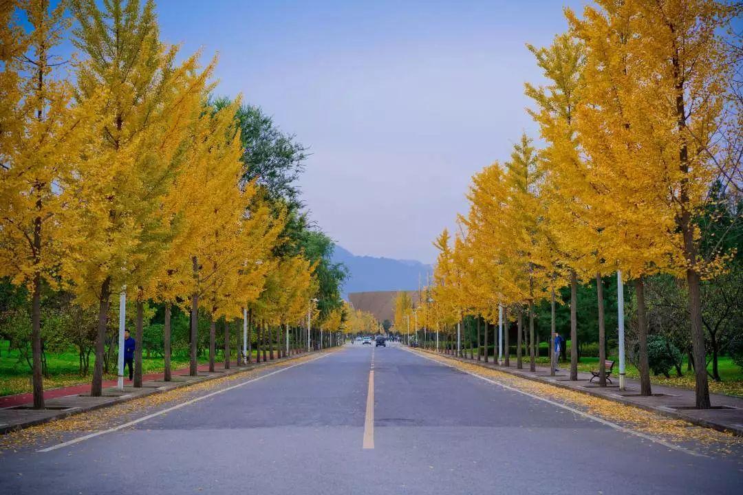 西安电子科技大学的秋天来啦:品察秋景、好生欢喜,与君同赏……