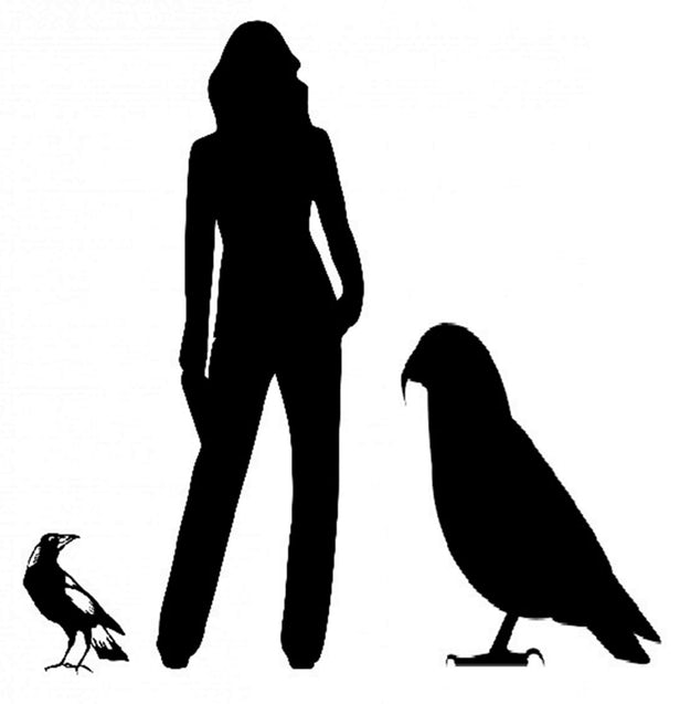 古生物学家在新西兰发现已灭绝巨型鹦鹉的遗骸