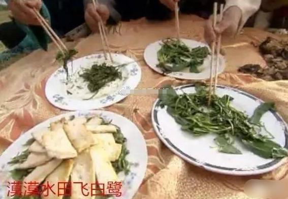 紫薇真的太有才了!红嘴绿鹦哥,在天愿作比翼鸟,原来是这些菜!
