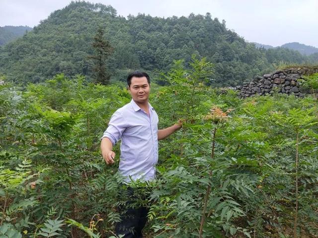 王涛:驯化野生乔木黄练芽树栽培所面临的难题