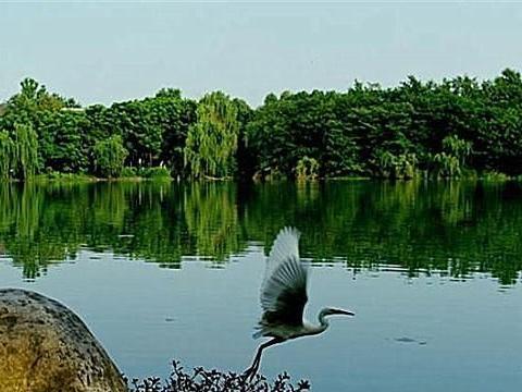 """成都""""最大""""的开放性森林公园,景象翠绿欲滴,耗资1.2亿!"""