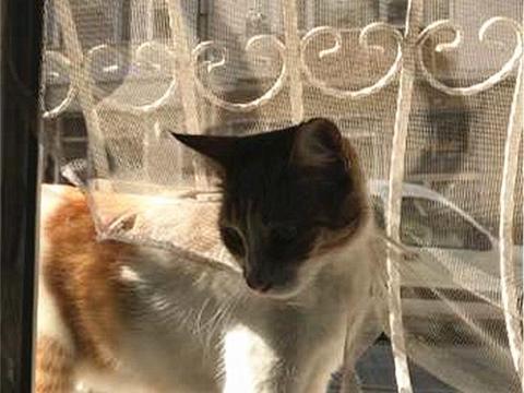 铲屎官回家发现流浪猫在扒纱窗,还躺在了床上?大好机会岂能放过