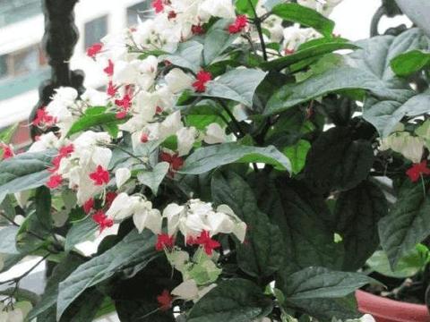 这几种植物懒人也适合养,四季常青,而且还很漂亮