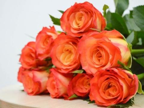 """喜欢玫瑰,就养""""珍品玫瑰""""金辉玫瑰,寓意快乐俏皮,可爱美丽!"""