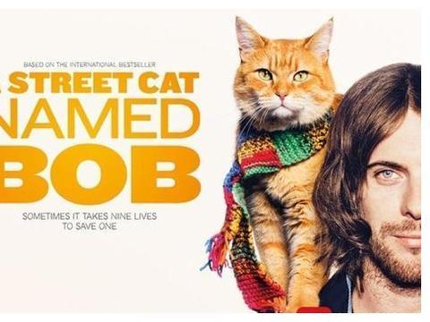 吸猫大片再度降临 《流浪猫鲍勃》续集明年上映