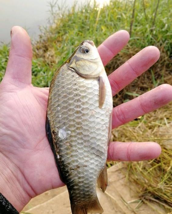 冬天鱼口轻,怎样才能提高灵敏度?老钓友都是这么做的,记牢了