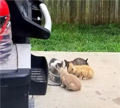 猫咪闯后院拍门讨饭引关注,屋主收养后,猫咪竟然和屋里的狗...