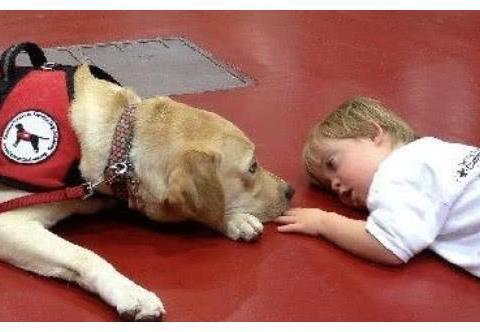 儿童医院门口坐着一排工作犬,动作奇怪,知道真相后感动不已