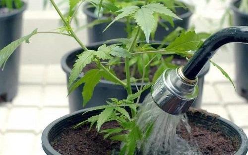 """这4种植物不能""""瞎浇水"""",""""喷水""""养护直接烂心,救都救不活"""