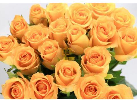 """喜欢玫瑰,就试试""""精品玫瑰""""假日公主,代表活力四射,四季开花"""