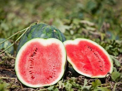 西瓜种植技术|无子西瓜的优点及移栽定植要点