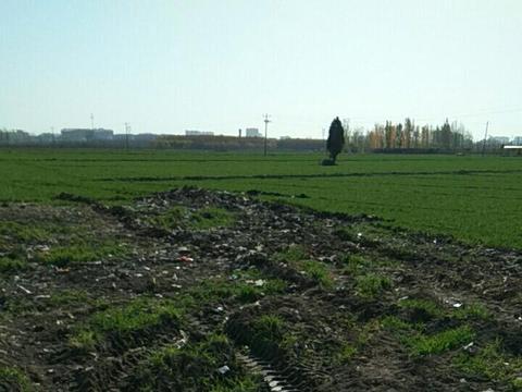 触目惊心!保定麦地被倾倒大量垃圾!原来......