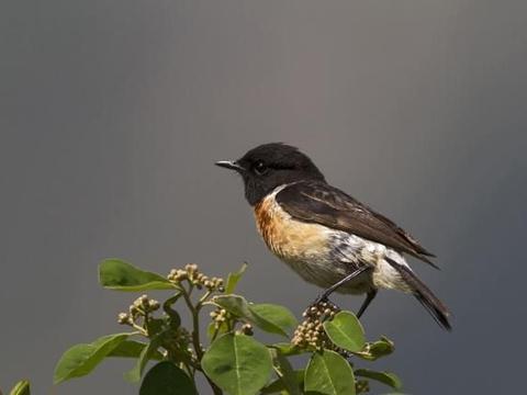 为什么你总是拍摄不好鸟?看看这几条,鸟类摄影入门技巧
