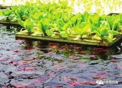 内乡县依托绿色生态资源发展绿色产业 特色生鲜农产品e路卖全国