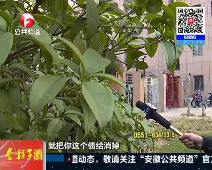 """《新闻第一线》淮南:""""化债""""买矿机  市民投四十万"""
