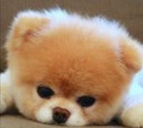 天生长有眉毛的狗狗...看完觉得还不如不长!
