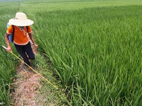 不要再随意打除草剂,看看如何正确使用,很多农民朋友都错了