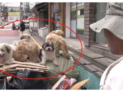 5只流浪狗跟大叔捡破烂,每天一起出门,对大叔不离不弃