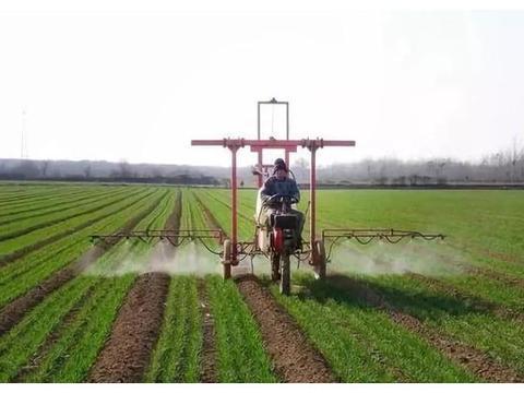 小麦除草剂,冬前打和春节后打有啥不一样?差别大了