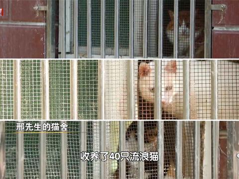 调解途中当事人三次离席   40只流浪猫找到归宿