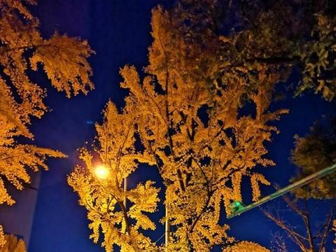 用华为手机拍的北京银杏大道夜景,手机夜景功能模式确实很强大