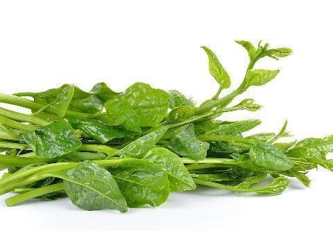 木耳菜合适什么时候种植?主要种植要点有什么?