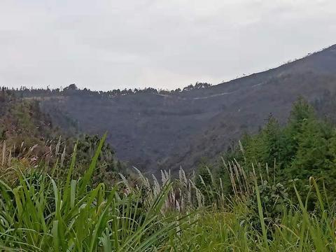 阳新新闻:利用电网狩猎 引发森林火灾 | 两名犯罪嫌疑人被拘