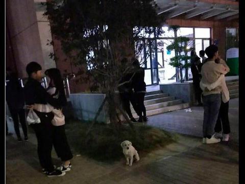 女生宿舍楼下有很多情侣,有只狗也坐在那里,可怜无助真单身狗!
