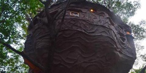 """广东最奇特的人造""""鸟窝"""":有床有厕所有茶室,还可以泡温泉"""