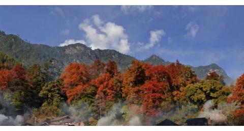 赏枫无需远赴香山,杭州自驾2h抵达童话圣境!万种枫情入画来