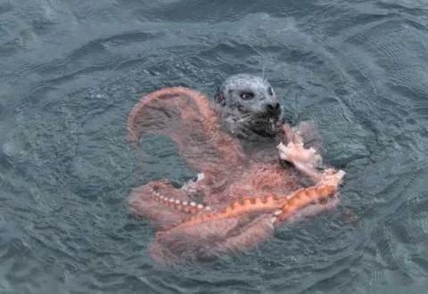 男子出海看一个动物水里挣扎, 离近看到的这一幕,让他惊恐万分