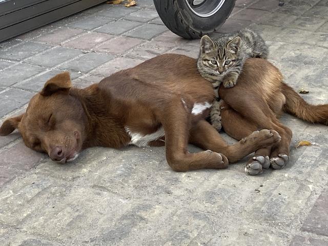 惨遭遗弃的猫狗,相依为命不肯离去,守在原地等主人